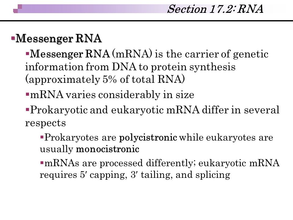 Section 17.2: RNA Messenger RNA