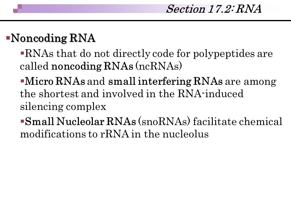 Section 17.2: RNA Noncoding RNA