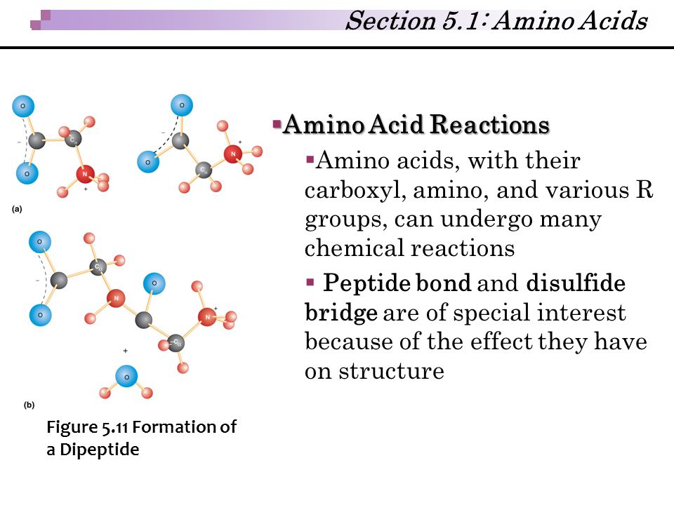 Section 5.1: Amino Acids Amino Acid Reactions