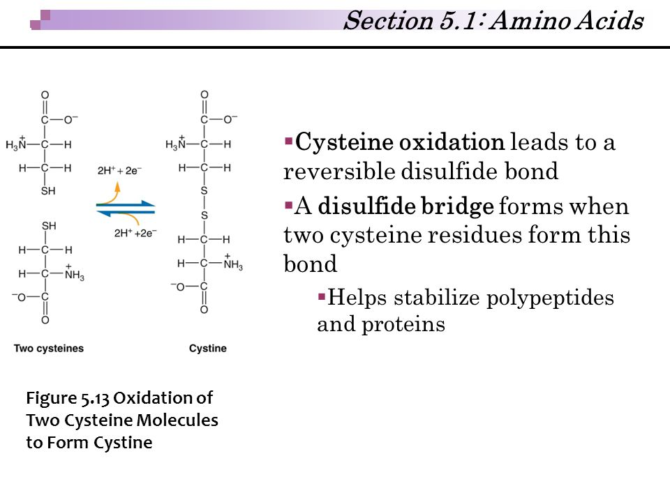 Section 5.1: Amino Acids Cysteine oxidation leads to a reversible disulfide bond. A disulfide bridge forms when two cysteine residues form this bond.