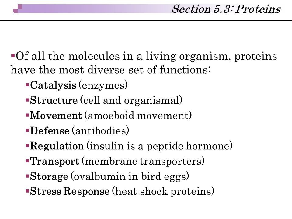 Section 5.3: Proteins Of all the molecules in a living organism, proteins have the most diverse set of functions:
