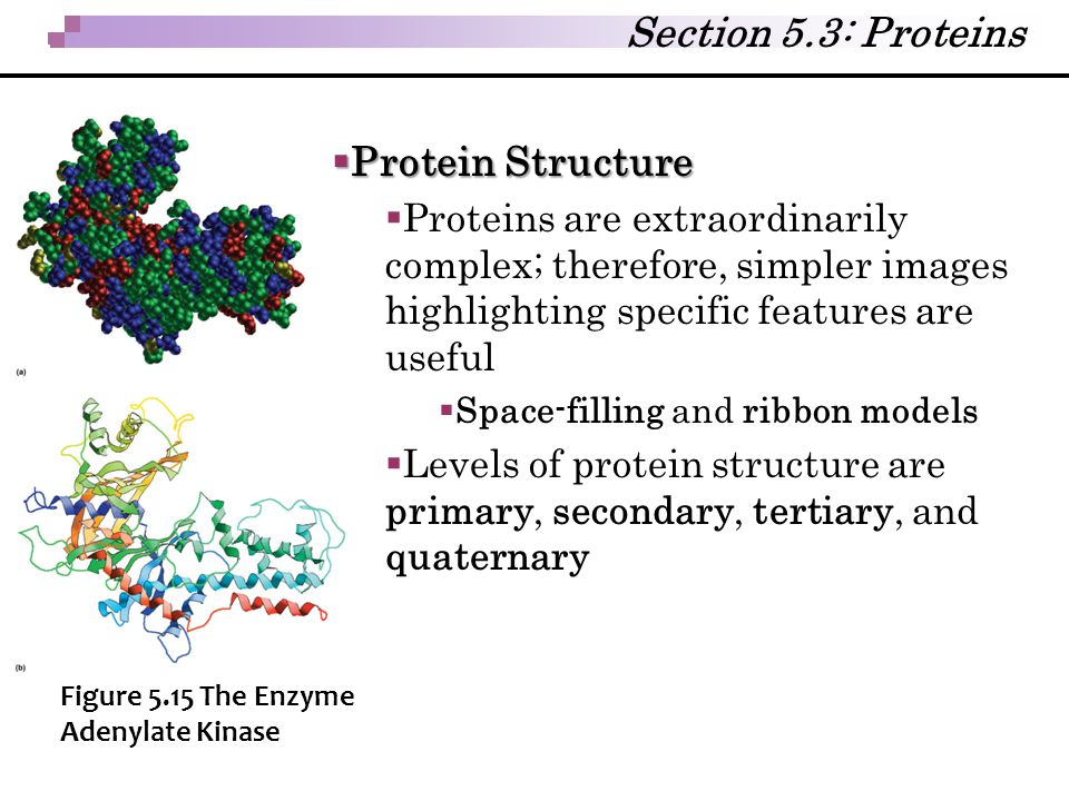Section 5.3: Proteins Protein Structure