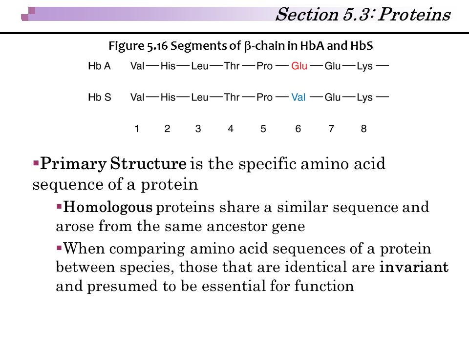 Section 5.3: Proteins Figure 5.16 Segments of b-chain in HbA and HbS. Primary Structure is the specific amino acid sequence of a protein.
