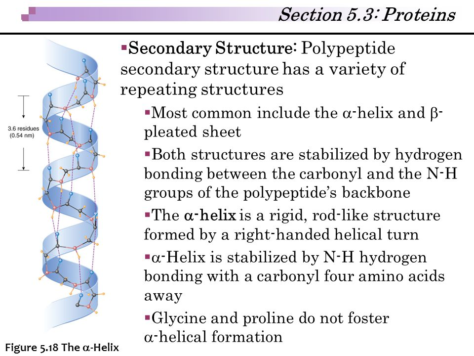Section 5.3: Proteins Secondary Structure: Polypeptide secondary structure has a variety of repeating structures.