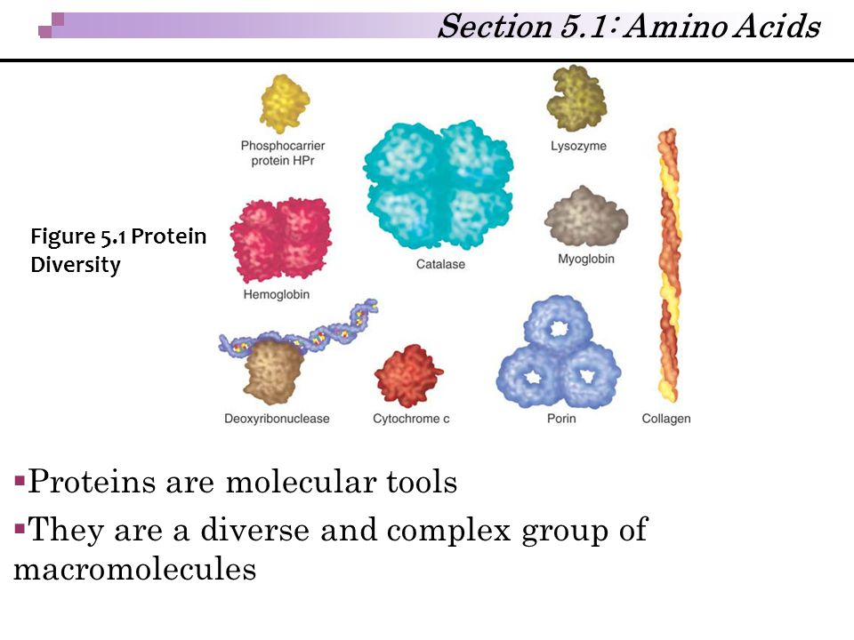 Proteins are molecular tools