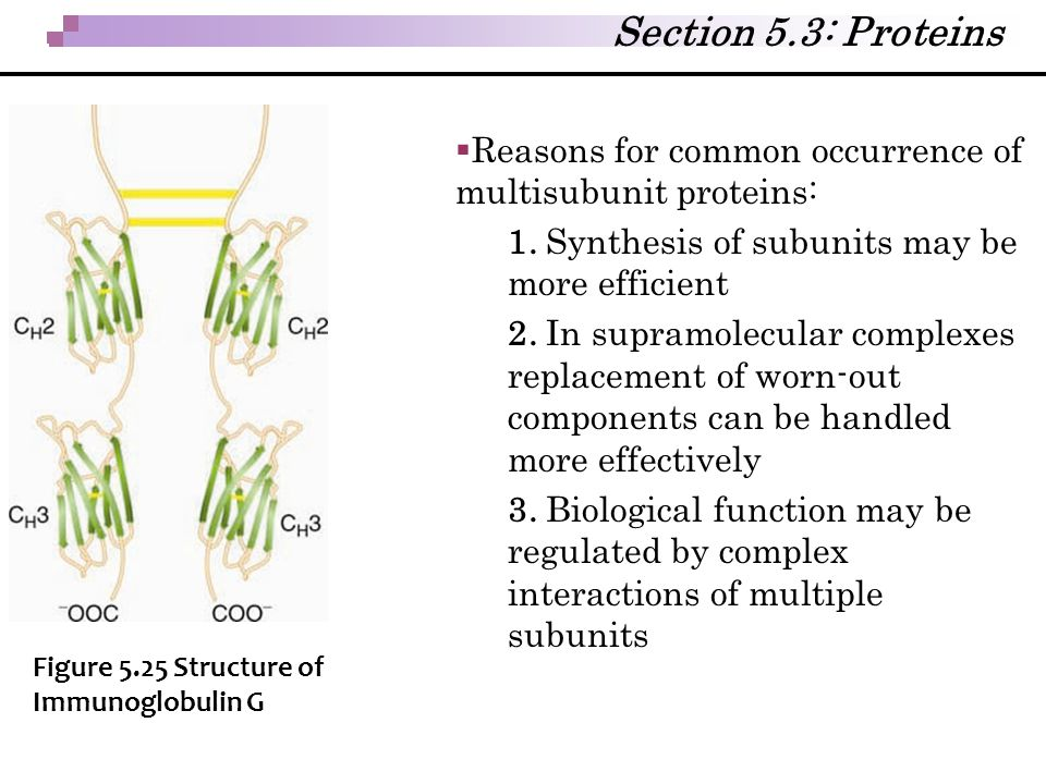 Section 5.3: Proteins Reasons for common occurrence of multisubunit proteins: 1. Synthesis of subunits may be more efficient.