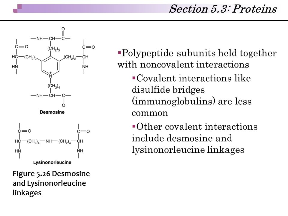 Section 5.3: Proteins Polypeptide subunits held together with noncovalent interactions.