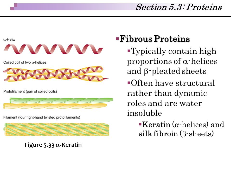 Section 5.3: Proteins Fibrous Proteins