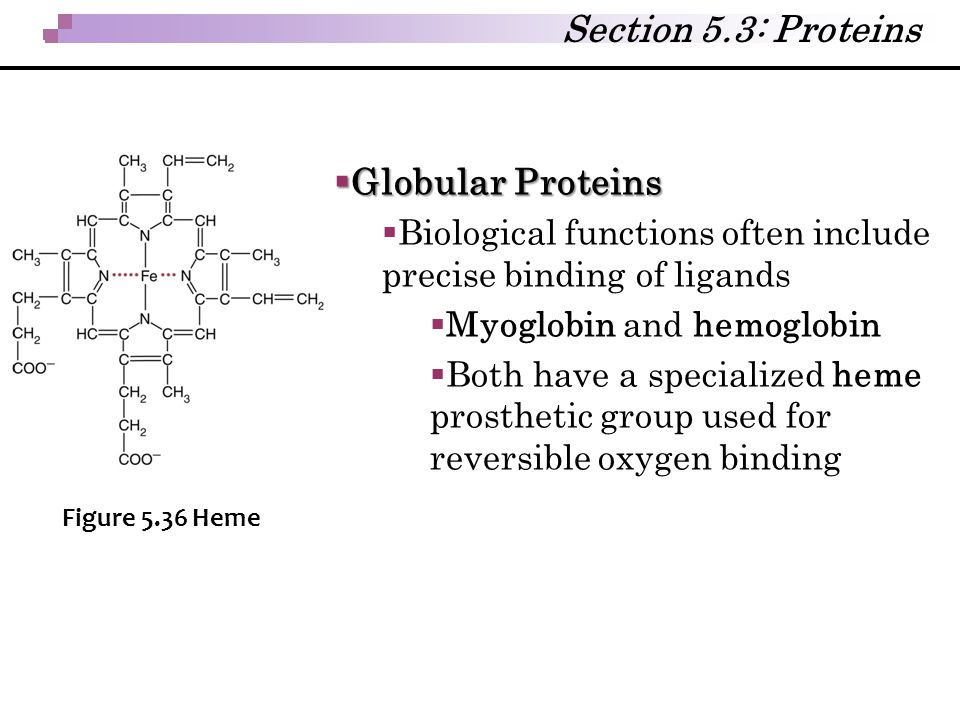 Section 5.3: Proteins Globular Proteins