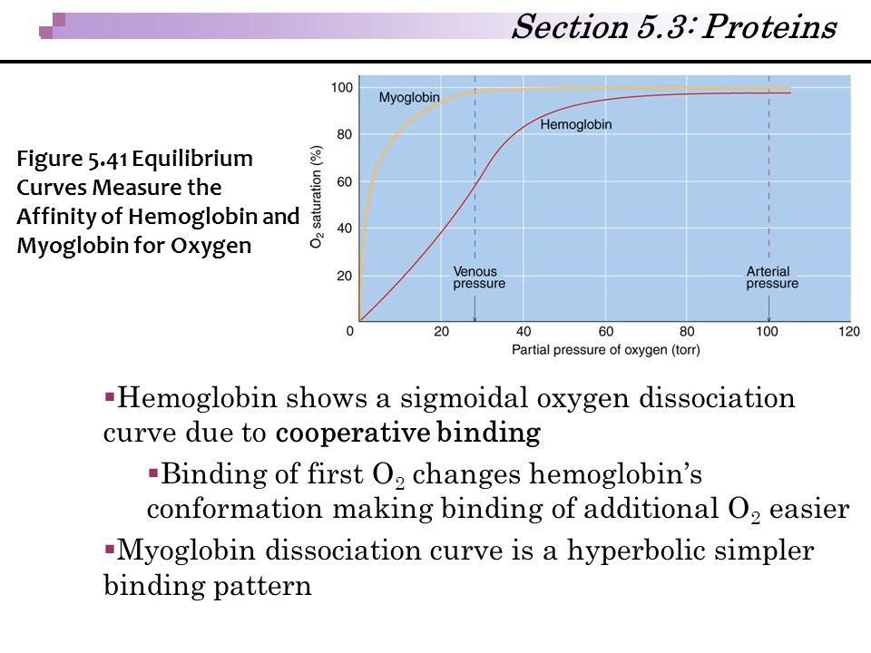 Section 5.3: Proteins Figure 5.41 Equilibrium Curves Measure the Affinity of Hemoglobin and Myoglobin for Oxygen.