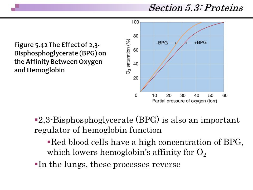 Section 5.3: Proteins Figure 5.42 The Effect of 2,3-Bisphosphoglycerate (BPG) on the Affinity Between Oxygen and Hemoglobin.