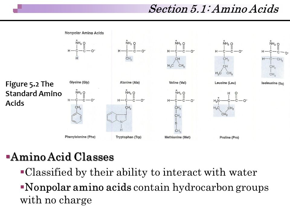 Section 5.1: Amino Acids Amino Acid Classes