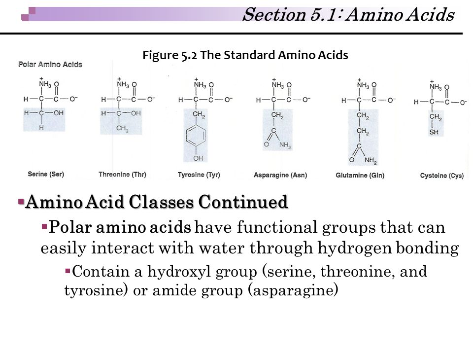 Amino Acid Classes Continued