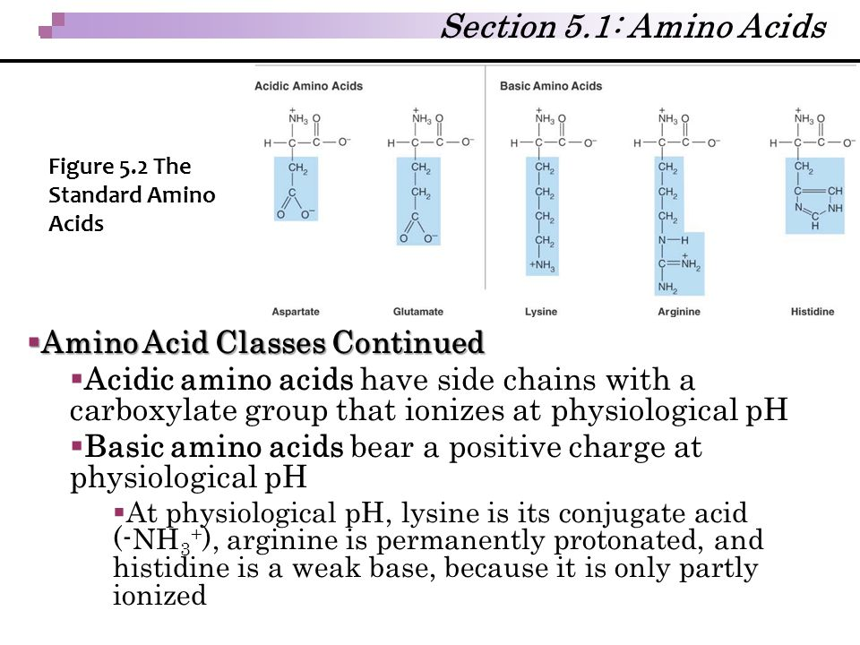 Section 5.1: Amino Acids Amino Acid Classes Continued
