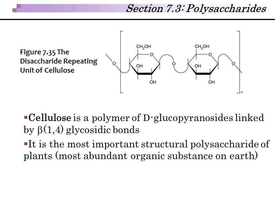 Section 7.3: Polysaccharides