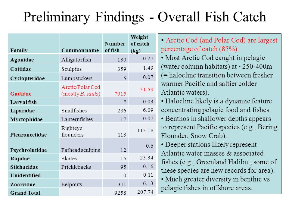 Preliminary Findings - Overall Fish Catch