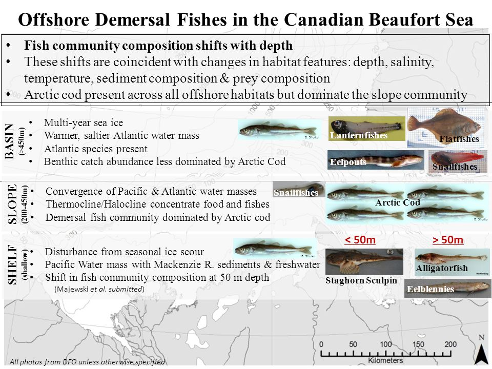 Offshore Demersal Fishes in the Canadian Beaufort Sea