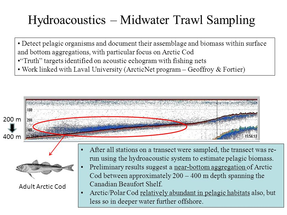 Hydroacoustics – Midwater Trawl Sampling
