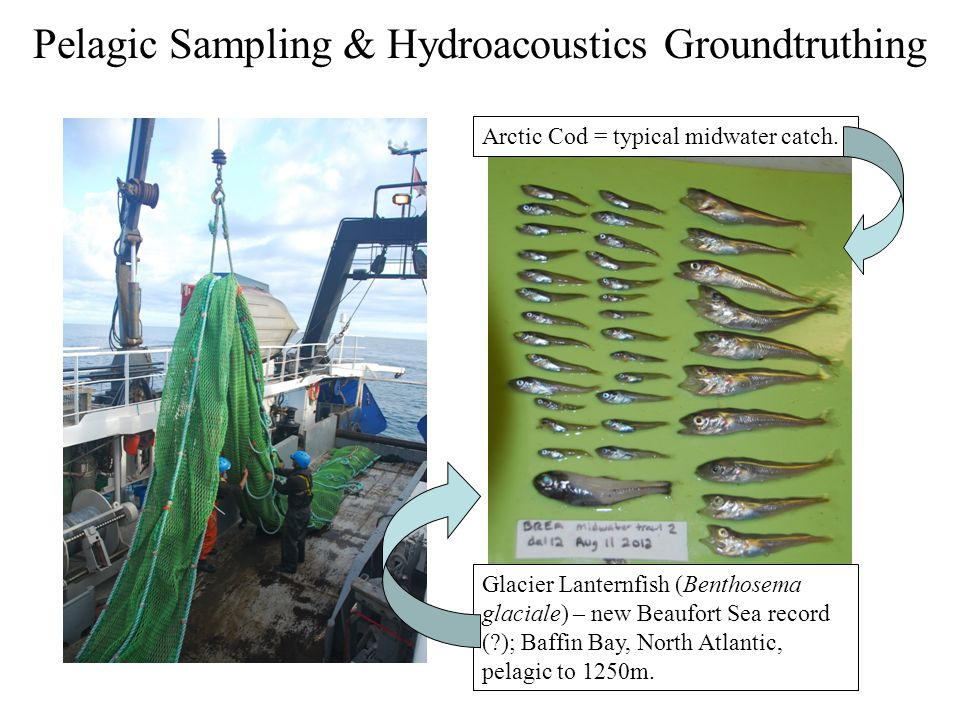 Pelagic Sampling & Hydroacoustics Groundtruthing