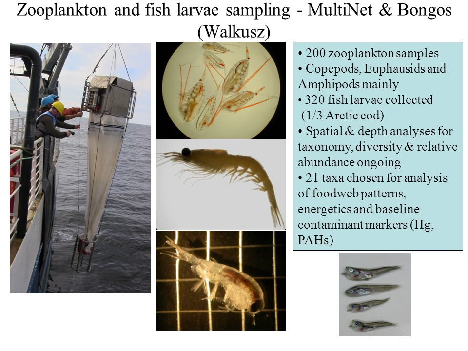 Zooplankton and fish larvae sampling - MultiNet & Bongos (Walkusz)