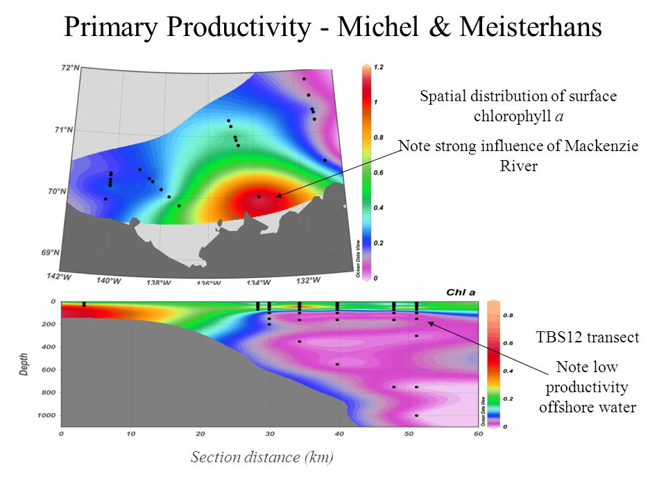 Primary Productivity - Michel & Meisterhans