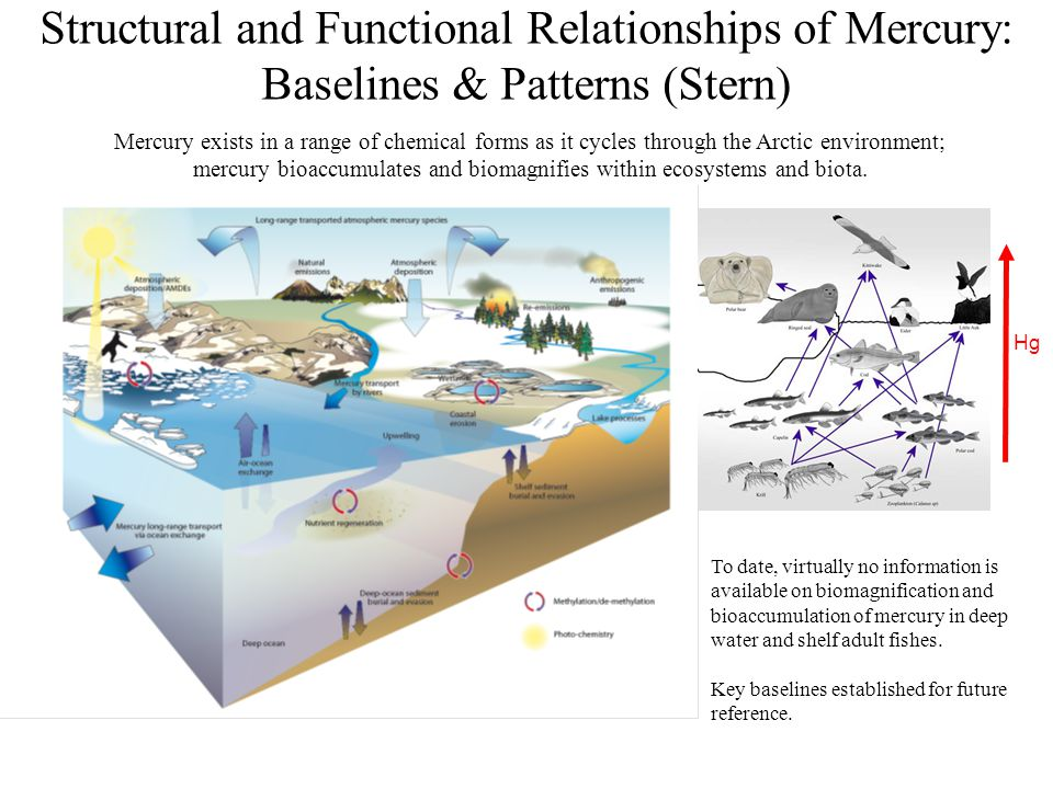 Structural and Functional Relationships of Mercury: Baselines & Patterns (Stern)