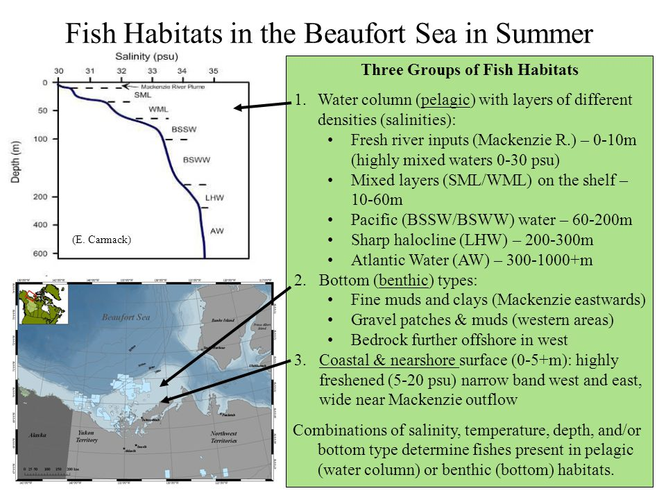 Fish Habitats in the Beaufort Sea in Summer