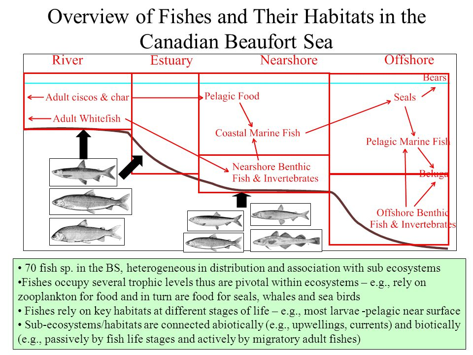 Overview of Fishes and Their Habitats in the Canadian Beaufort Sea