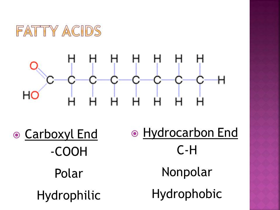 Fatty Acids Hydrocarbon End Carboxyl End C-H -COOH Nonpolar Polar