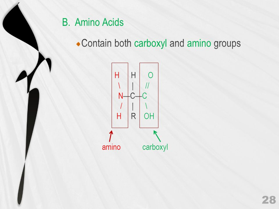 Contain both carboxyl and amino groups