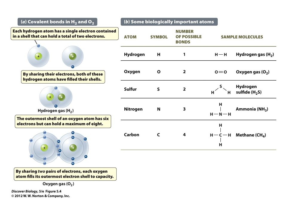 Figure 5.4 Covalent Bonds and Electron Shells