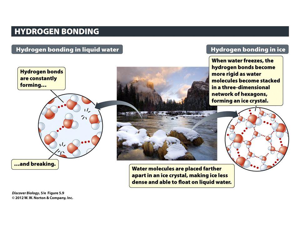 Figure 5.9 Hydrogen Bonding between Water Molecules