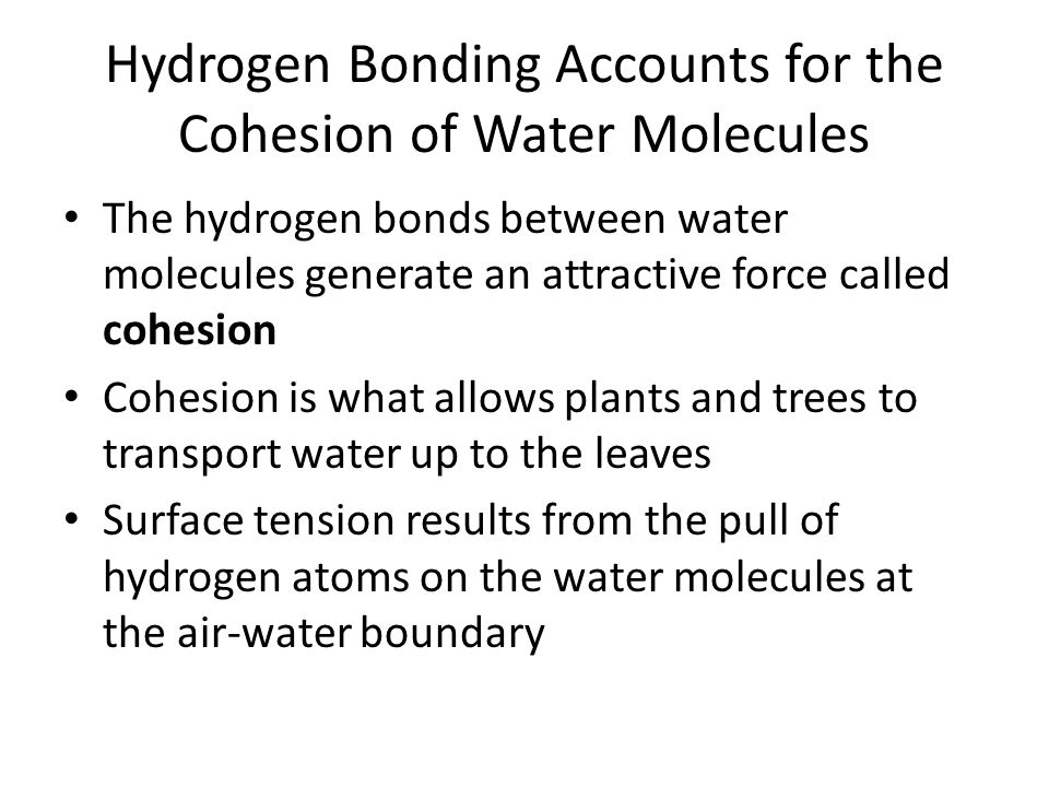 Hydrogen Bonding Accounts for the Cohesion of Water Molecules