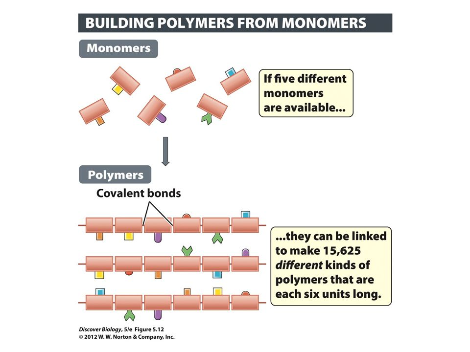 Figure 5.12 Polymers Are Long Chains Made from Repeating Units Known as Monomers