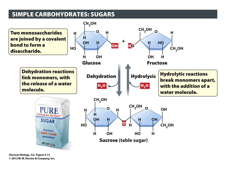 Figure 5.13 Monosaccharides Can Bond Together to Form Disaccharides