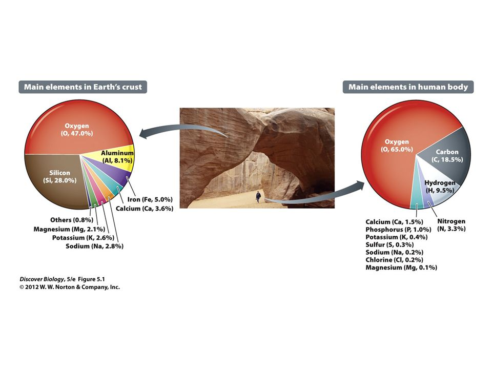 Figure 5.1 Chemical Composition of Earth's Crust and the Human Body