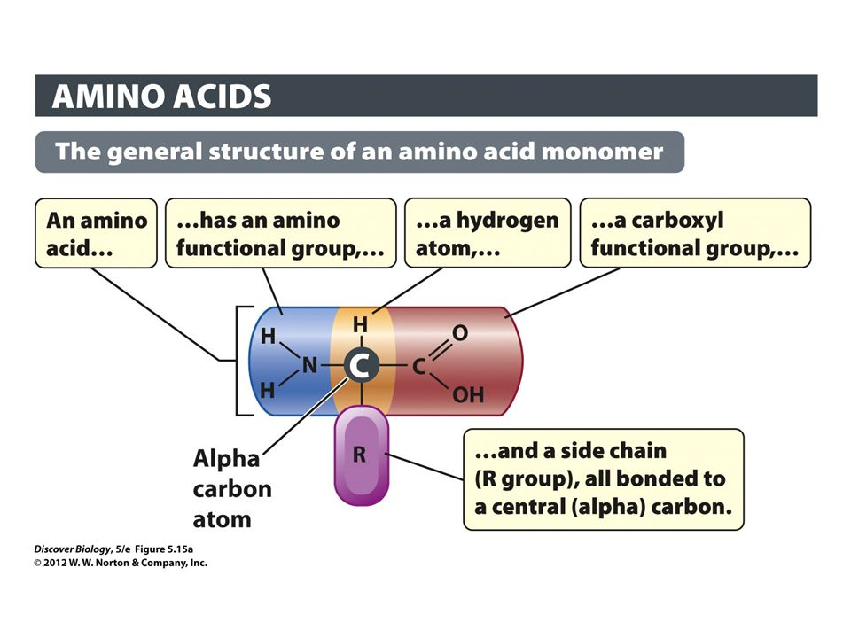 Figure 5.15a The Structure and Diversity of Amino Acids: The General Structure of an Amino Acid Monomer