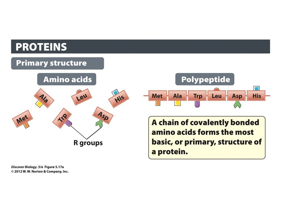 Figure 5.17a The Four Levels of Protein Structure: Primary Structure