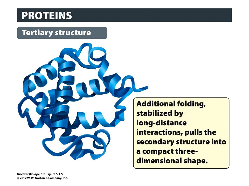 Figure 5.17c The Four Levels of Protein Structure: Tertiary Structure