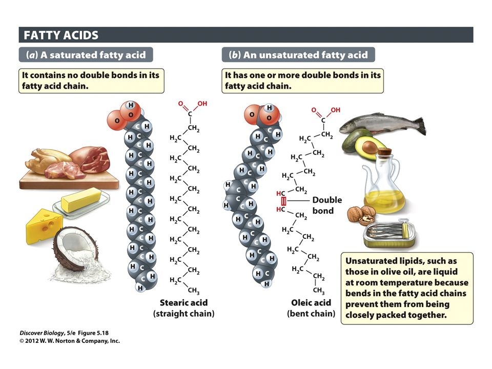 Figure 5.18 Saturated and Unsaturated Fatty Acids Are the Two Main Types of Fatty Acids