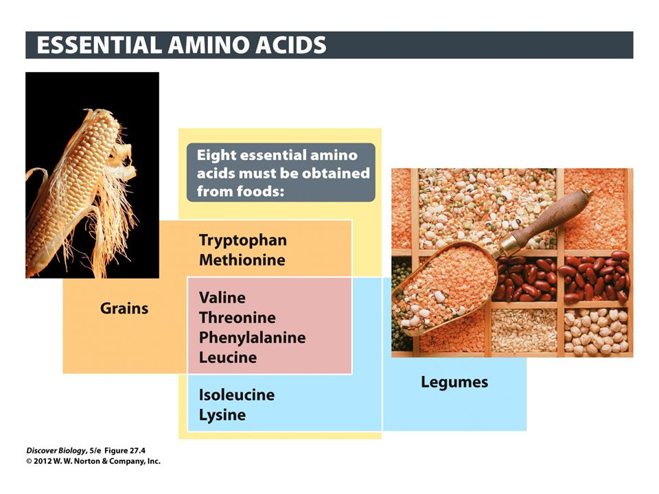 Figure 27.4 Adult Humans Cannot Make 8 of the 20 Amino Acids That We Need to Build Proteins