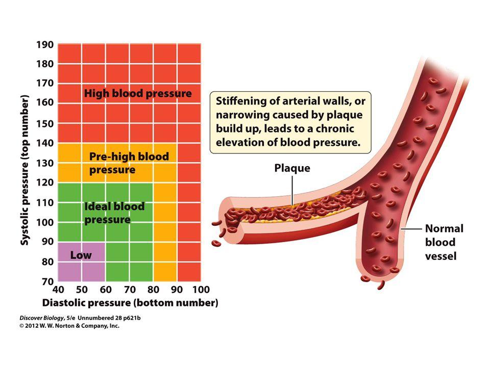Figure 2 Adult Blood Pressure Ranges