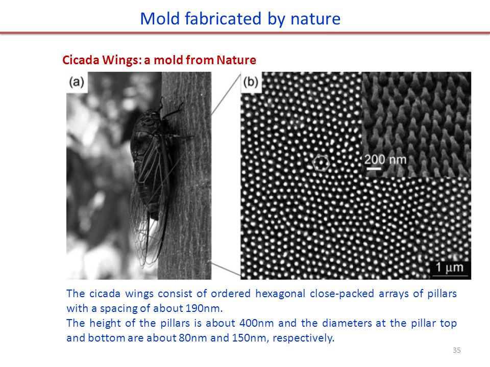 Mold fabricated by nature
