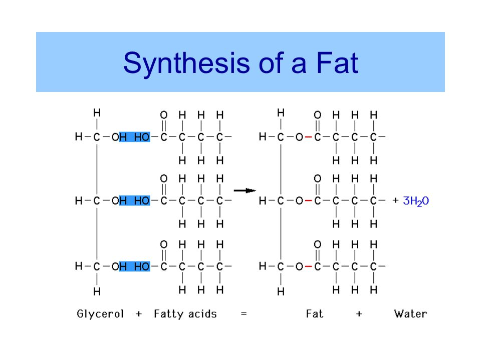 Synthesis of a Fat