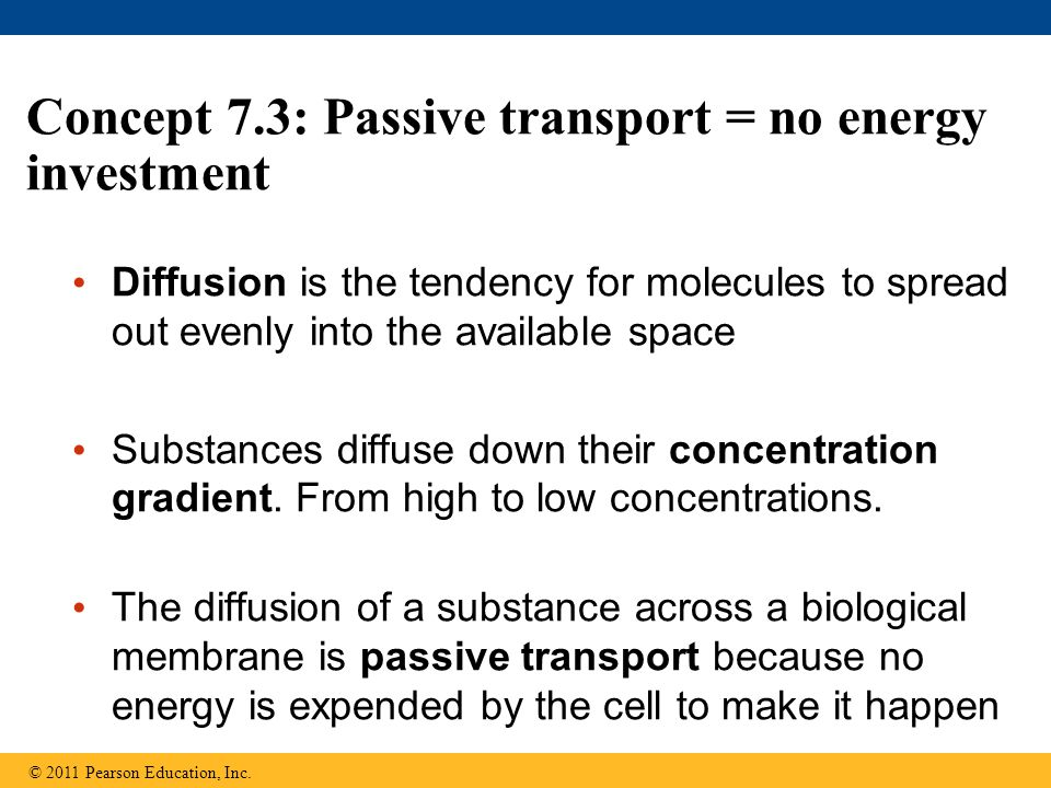 Concept 7.3: Passive transport = no energy investment