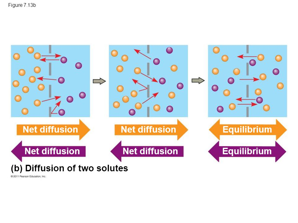(b) Diffusion of two solutes