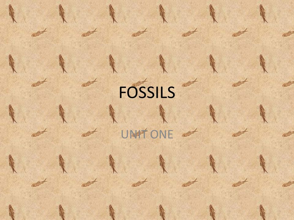 FOSSILS UNIT ONE