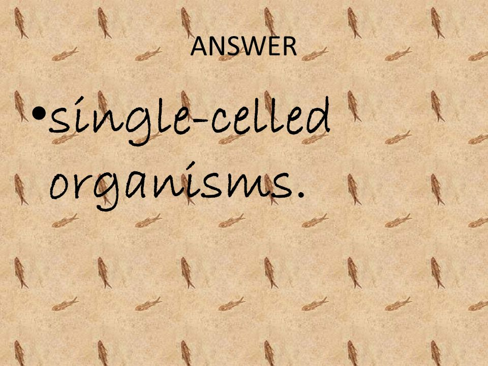 single-celled organisms.
