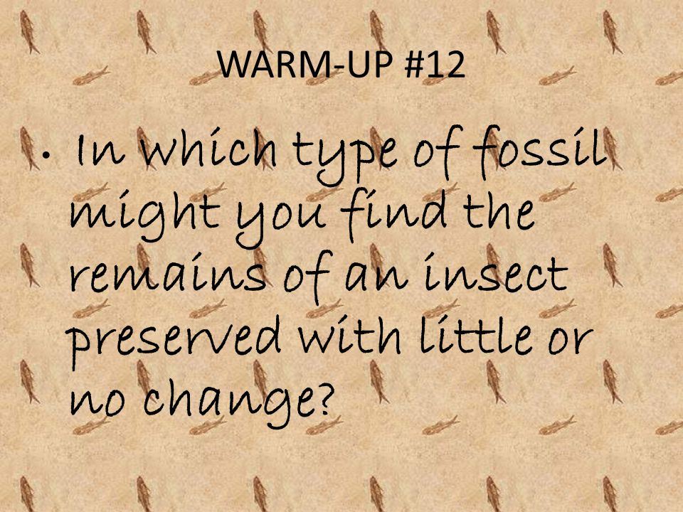 WARM-UP #12 In which type of fossil might you find the remains of an insect preserved with little or no change
