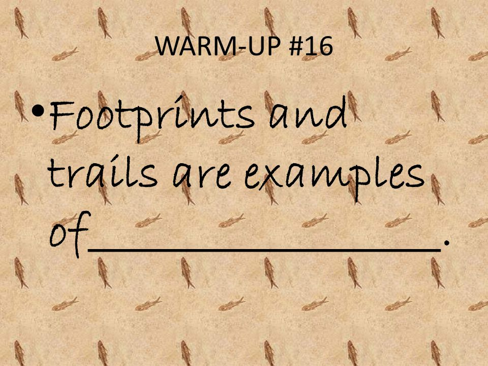 Footprints and trails are examples of__________________.